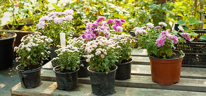 鲜花绿植区